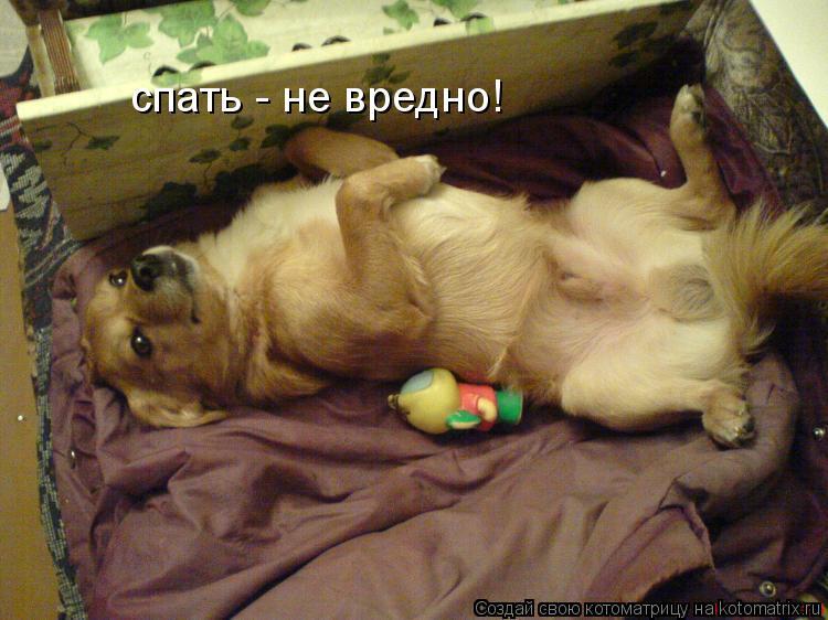 Котоматрица: спать - не вредно!
