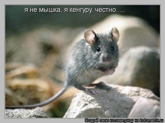 Котоматрица: я не мышка, я кенгуру. честно.....