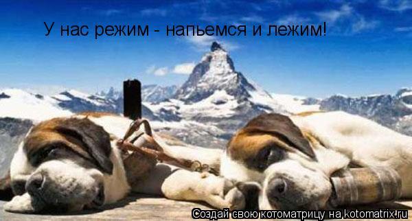 Котоматрица: У нас режим - напьемся и лежим!