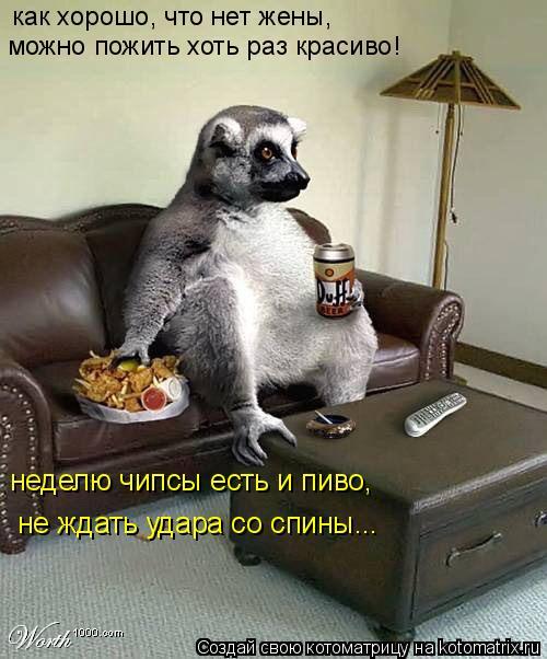 Котоматрица: как хорошо, что нет жены, можно пожить хоть раз красиво! неделю чипсы есть и пиво, не ждать удара со спины...