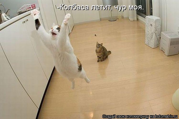 Котоматрица: -Колбаса летит, чур моя.