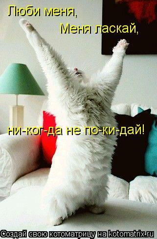 Котоматрица: Люби меня, Меня ласкай, ни-ког-да не по-ки-дай!