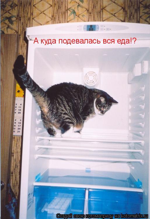 Котоматрица: А куда подевалась вся еда!?