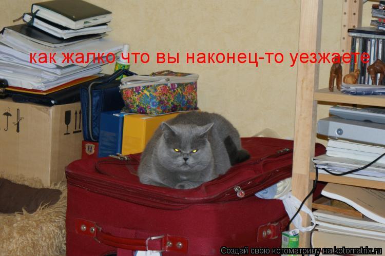 Котоматрица: как жалко что вы наконец-то уезжаете