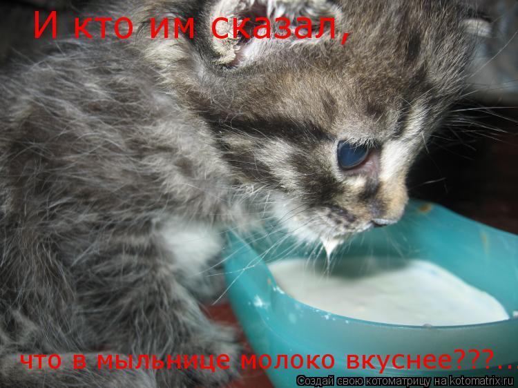 Котоматрица: И кто им сказал, что в мыльнице молоко вкуснее???...