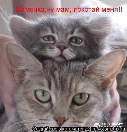 Котоматрица: Мамочка,ну мам, покотай меня!!