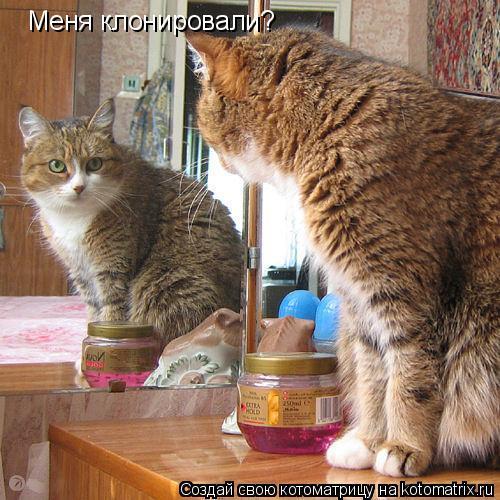 Котоматрица: Меня клонировали?