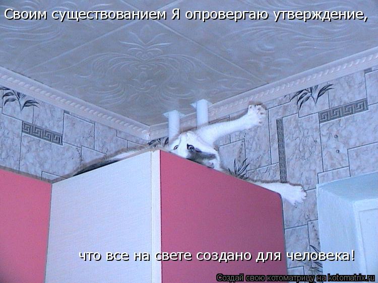 Котоматрица: Своим существованием Я опровергаю утверждение, что все на свете создано для человека!