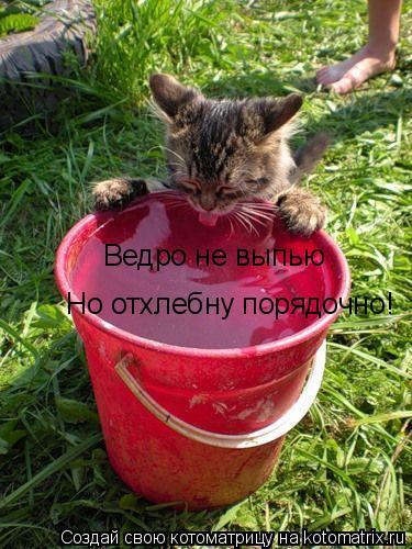 Котоматрица: Ведро не выпью Но отхлебну порядочно!