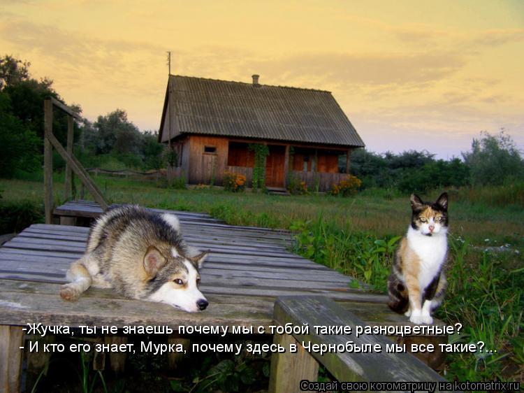 Котоматрица: -Жучка, ты не знаешь почему мы с тобой такие разноцветные? - И кто его знает, Мурка, почему здесь в Чернобыле мы все такие?...