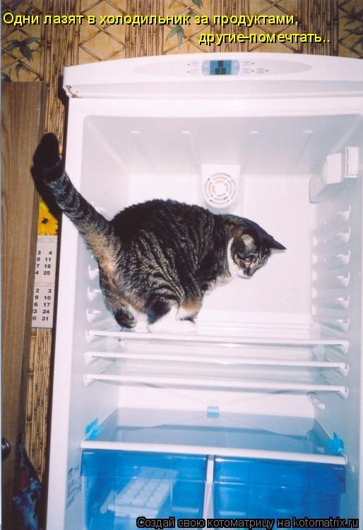 Котоматрица: Одни лазят в холодильник за продуктами,  другие-помечтать..