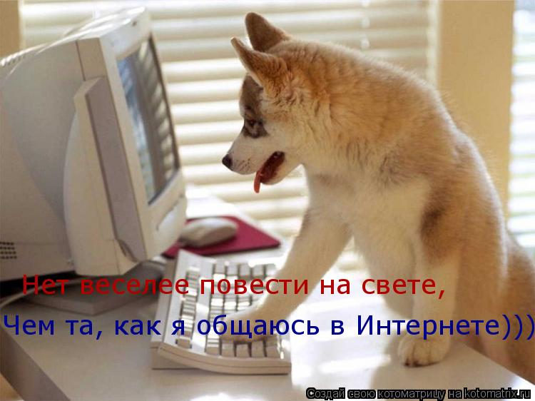 Котоматрица: Нет веселее повести на свете, Чем та, как я общаюсь в Интернете)))