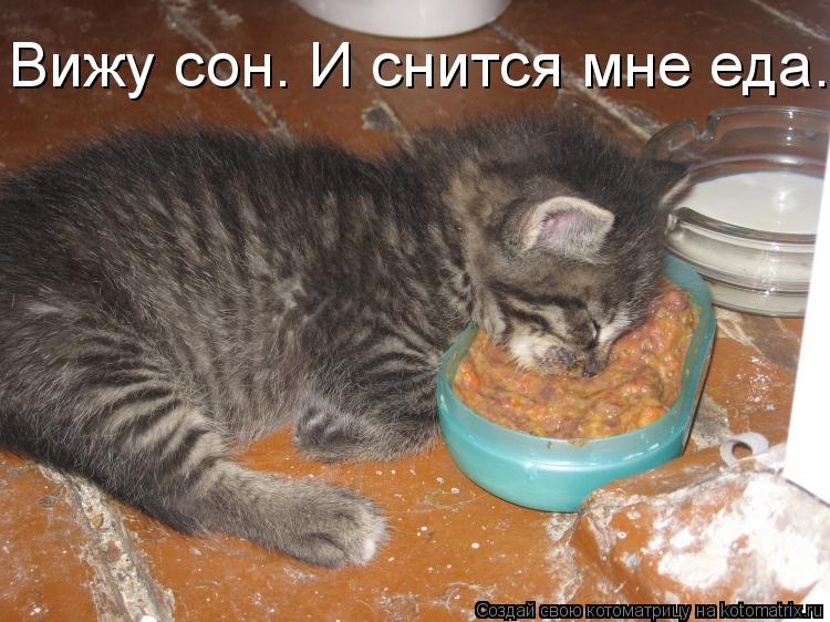 Котоматрица: Вижу сон. И снится мне еда.