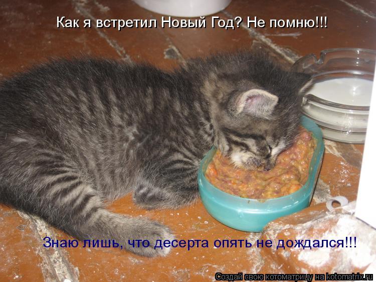 Котоматрица: Как я встретил Новый Год? Не помню!!! Знаю лишь, что десерта опять не дождался!!!