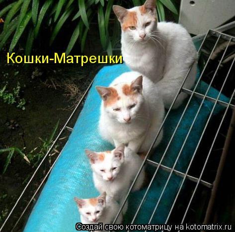 Котоматрица: Кошки-Матрешки