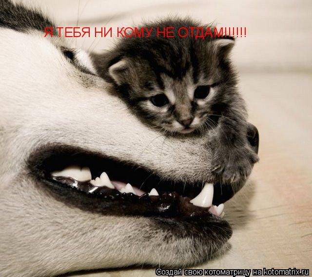 Котоматрица: Я ТЕБЯ НИ КОМУ НЕ ОТДАМ!!!!!!