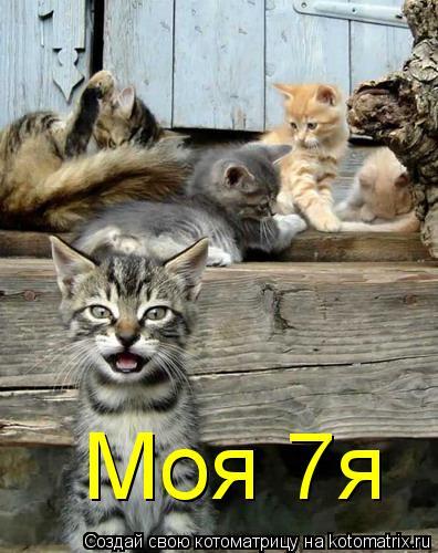 Котоматрица: Моя 7я