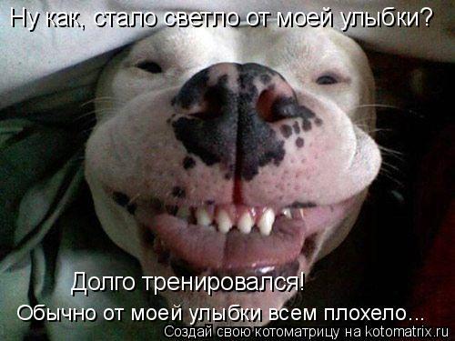 Котоматрица: Ну как, стало светло от моей улыбки? Долго тренировался! Обычно от моей улыбки всем плохело...