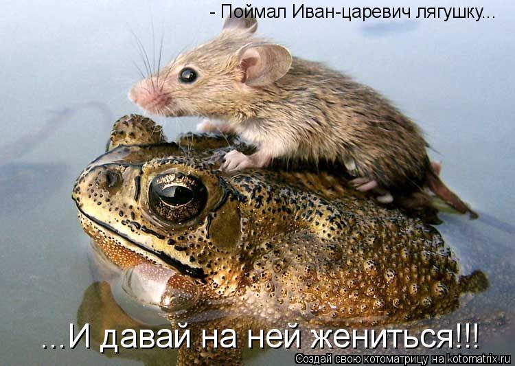 Котоматрица: - Поймал Иван-царевич лягушку... ...И давай на ней жениться!!!