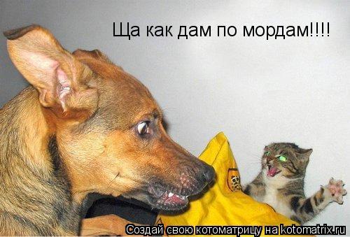 Котоматрица: Ща как дам по мордам!!!!