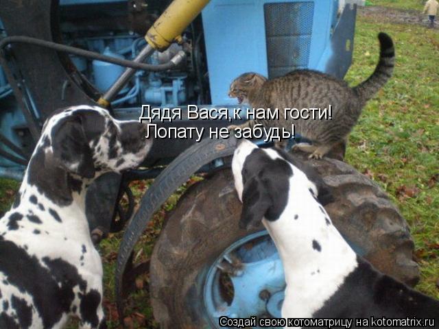 Котоматрица: Дядя Вася,к нам гости! Лопату не забудь!