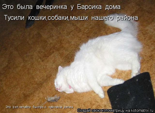 Котоматрица: Это  была  вечеринка  у  Барсика  дома Тусили  кошки,собаки,мыши  нашего  района Это  реп,читайте  быстро,с  чувством  ритма