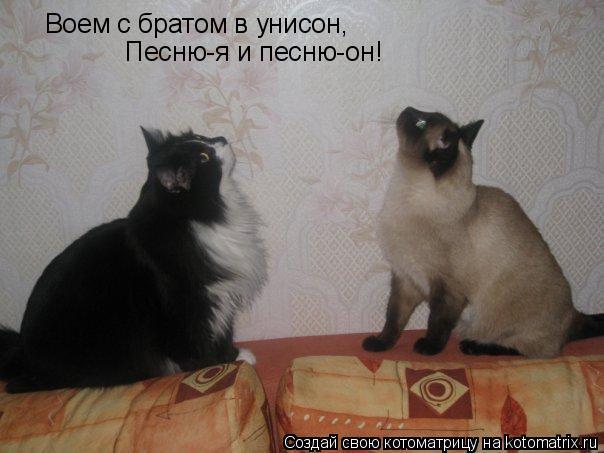 Котоматрица: Воем с братом в унисон, Песню-я и песню-он!