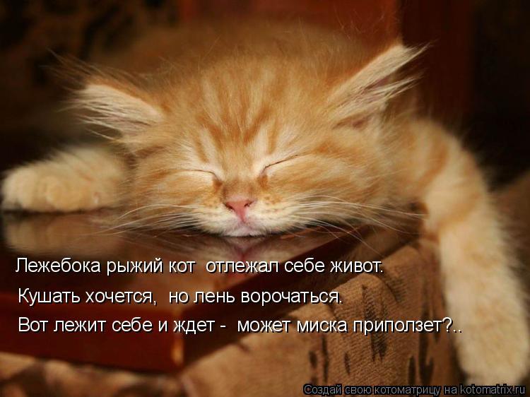 Котоматрица: Вот лежит себе и ждет -  может миска приползет?..   Кушать хочется,  но лень ворочаться.   Лежебока рыжий кот  отлежал себе живот.