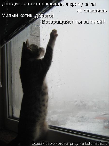 Котоматрица: Дождик капает по крыше, я кричу, а ты не слышишь Милый котик, дорогой Возвращайся ты за мной!!