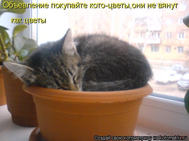 Котоматрица: Объевление покупайте кото-цветы,они не вянут как цветы