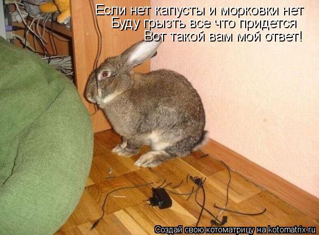 Котоматрица: Если нет капусты и морковки нет Буду грызть все что придется Вот такой вам мой ответ!