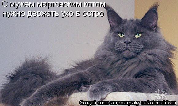 Котоматрица: С мужем мартовским котом  нужно держать ухо в остро