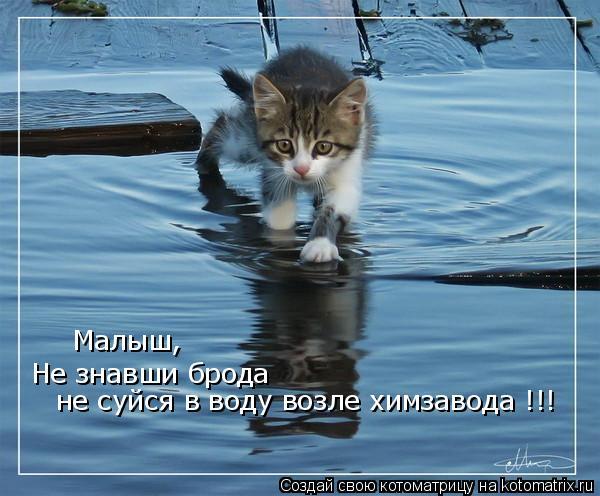 Котоматрица: Не знавши брода  не суйся в воду возле химзавода !!!  Малыш,