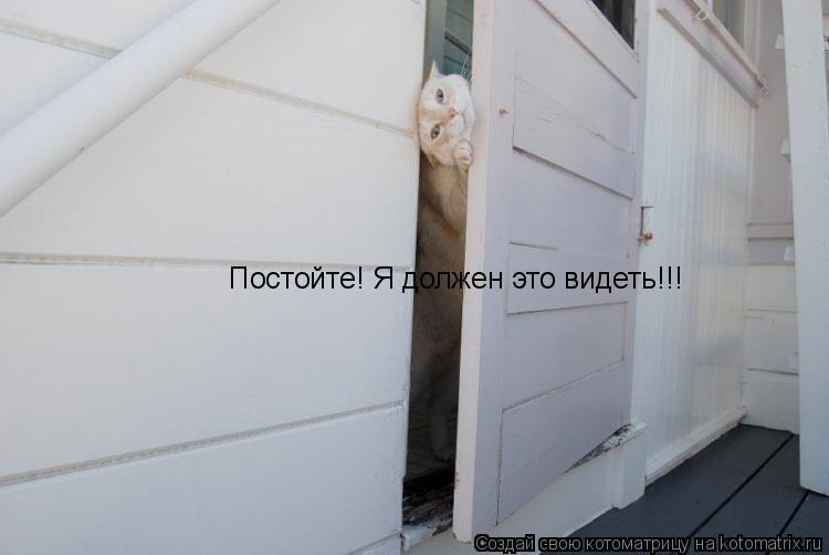Котоматрица: Постойте! Я должен это видеть!!!