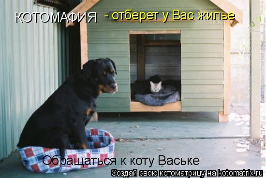 Котоматрица: КОТОМАФИЯ - отберет у Вас жилье Обращаться к коту Ваське