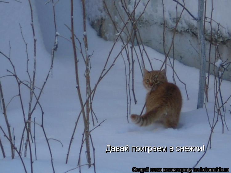 Котоматрица: Давай поиграем в снежки!