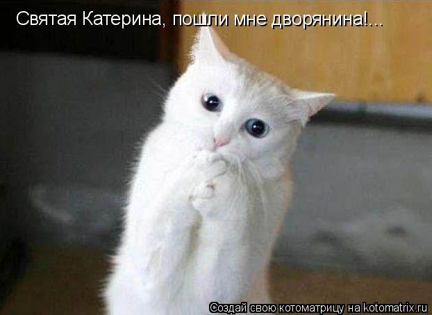Котоматрица: Святая Катерина, пошли мне дворянина!...