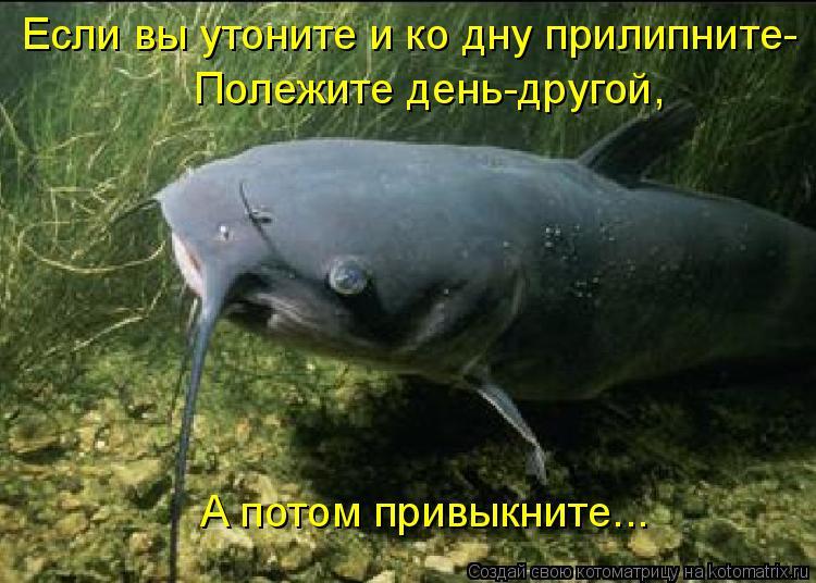 Котоматрица: Если вы утоните и ко дну прилипните- Полежите день-другой,  А потом привыкните...