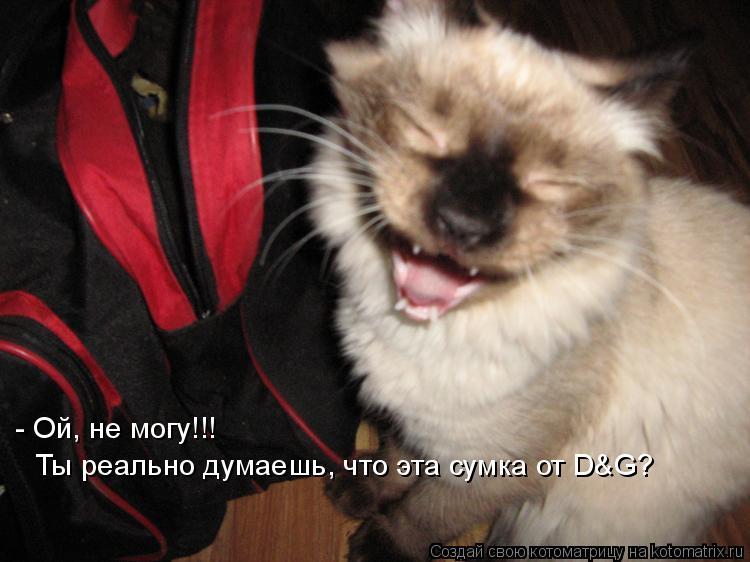 Котоматрица: - Ой, не могу!!! Ты реально думаешь, что эта сумка от D&G?