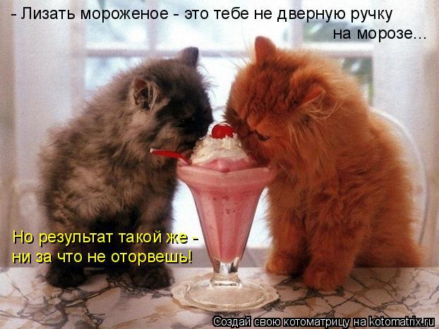 Котоматрица: - Лизать мороженое - это тебе не дверную ручку на морозе... Но результат такой же -  ни за что не оторвешь!