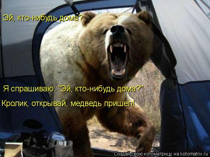 """Котоматрица: Эй, кто-нибудь дома? Я спрашиваю: """"Эй, кто-нибудь дома?"""" Кролик, открывай, медведь пришел!"""