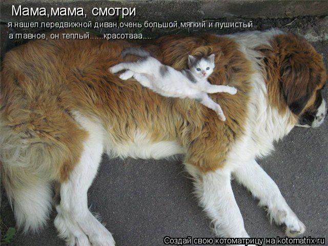 Котоматрица: Мама,мама, смотри я нашел передвижной диван,очень большой,мягкий и пушистый а главное, он теплый......красотааа....