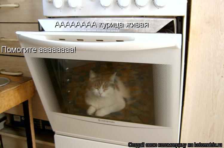 Котоматрица: АААААААА курица живая Помогите аааааааа!