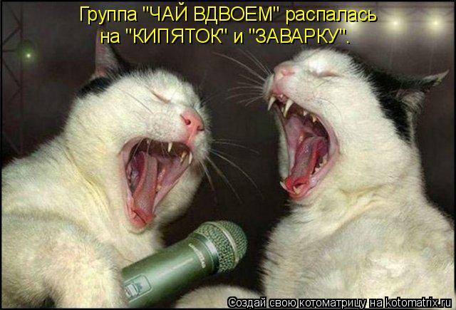"""Котоматрица: Группа """"ЧАЙ ВДВОЕМ"""" распалась на """"КИПЯТОК"""" и """"ЗАВАРКУ""""."""
