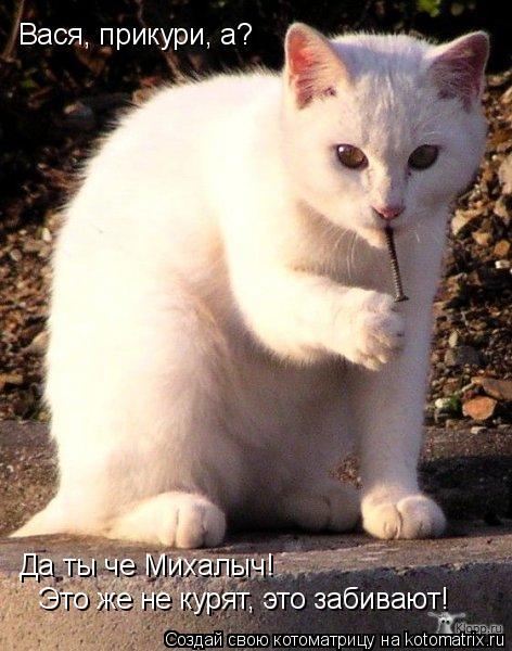 Котоматрица: Вася, прикури, а? Да ты че Михалыч!  Это же не курят, это забивают!