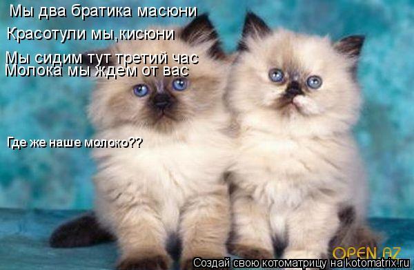 Котоматрица: Мы два братика масюни Красотули мы,кисюни Мы сидим тут третий час Молока мы ждем от вас Где же наше молоко??