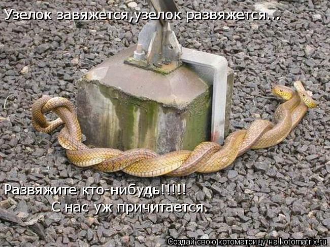 Котоматрица: Узелок завяжется,узелок развяжется... Развяжите кто-нибудь!!!!! С нас уж причитается.