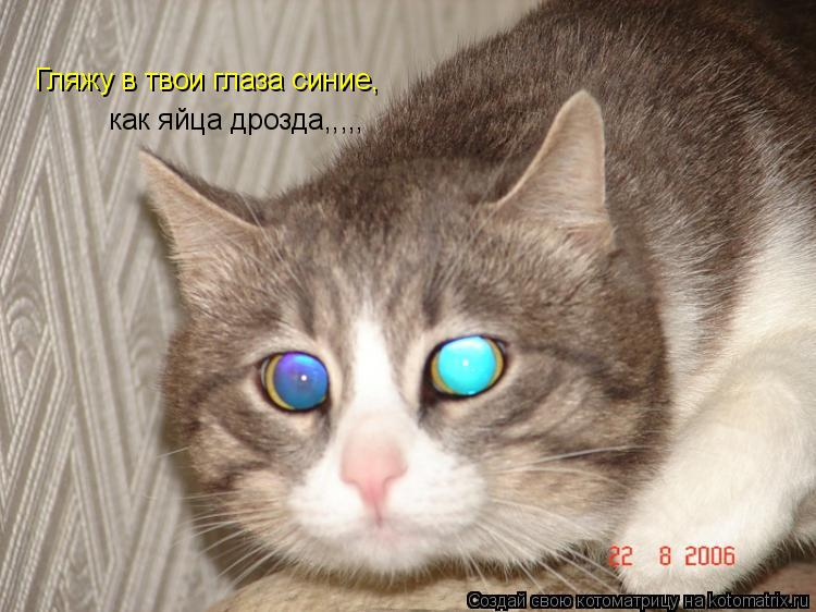 Котоматрица: Гляжу в твои глаза синие,  как яйца дрозда,,,,,