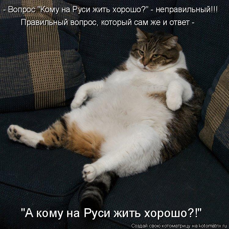 """Котоматрица: - Вопрос """"Кому на Руси жить хорошо?"""" - неправильный!!! Правильный вопрос, который сам же и ответ - """"А кому на Руси жить хорошо?!"""""""