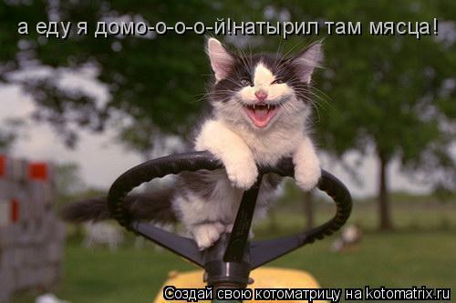 Котоматрица: а еду я домо-о-о-о-й!натырил там мясца!